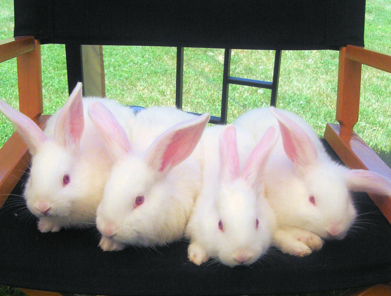 away from the bunnies